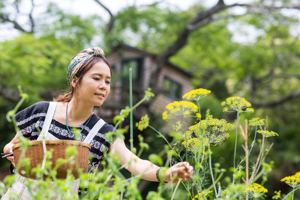 A woman collecting from dill plants from her small vegetable patch