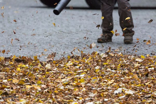 Worker using leaf blower to remove leaves from the road.