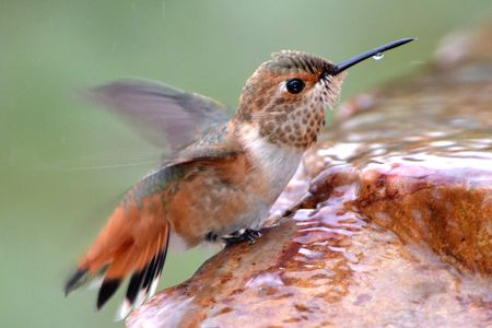 Attracting Hummingbirds With Water