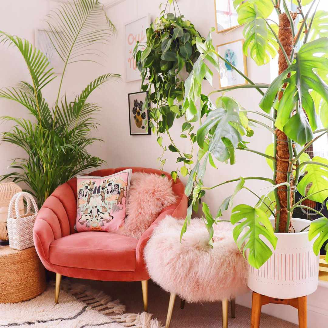 Pink chairs and lots of plants