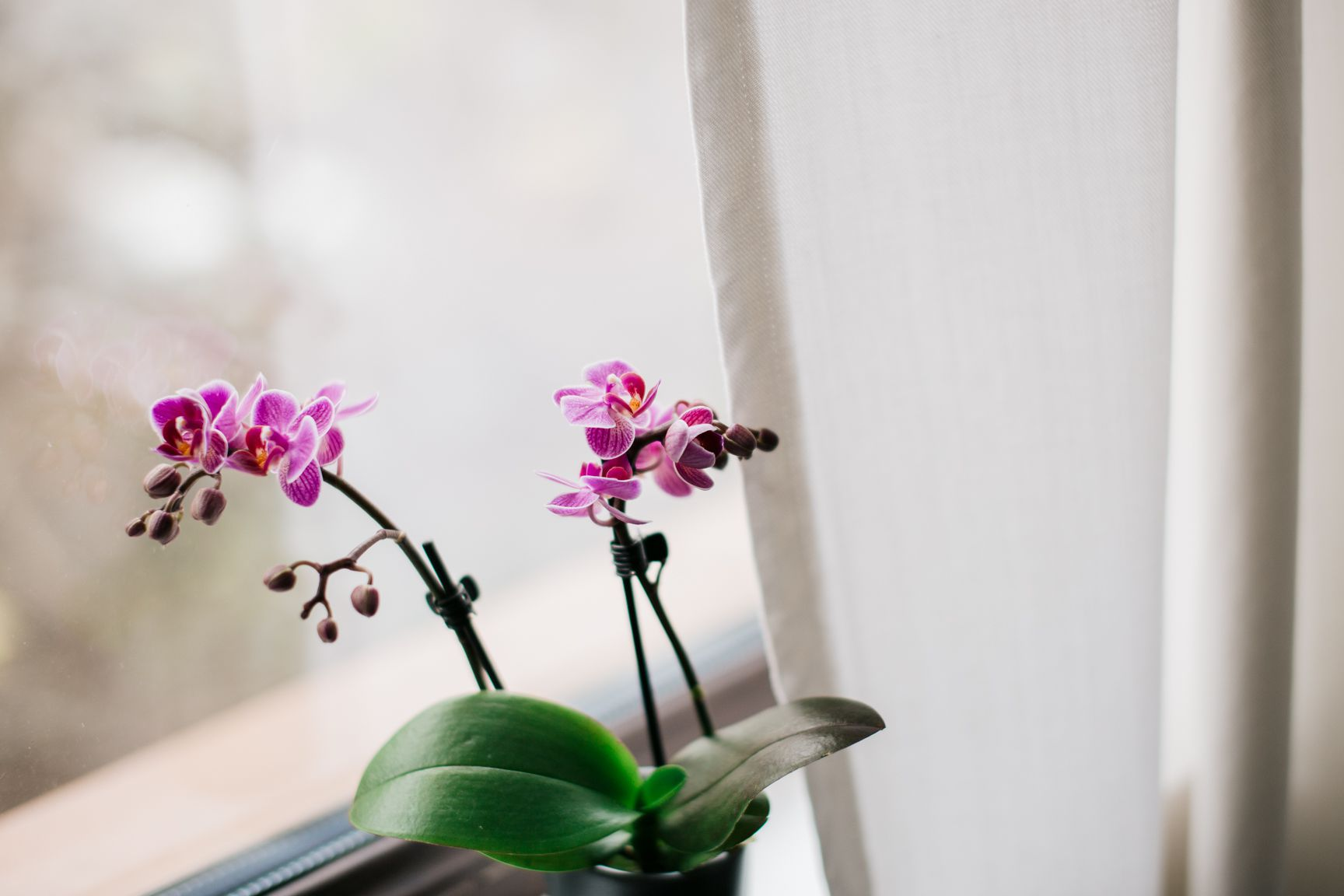 orchid by a window