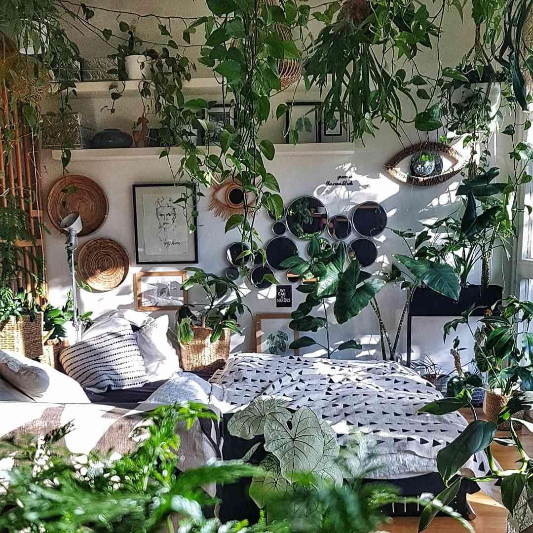 maximalist plant setup