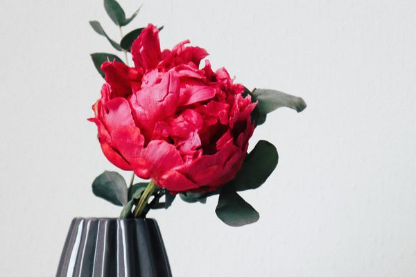red peony flower in a gray vase on a white table