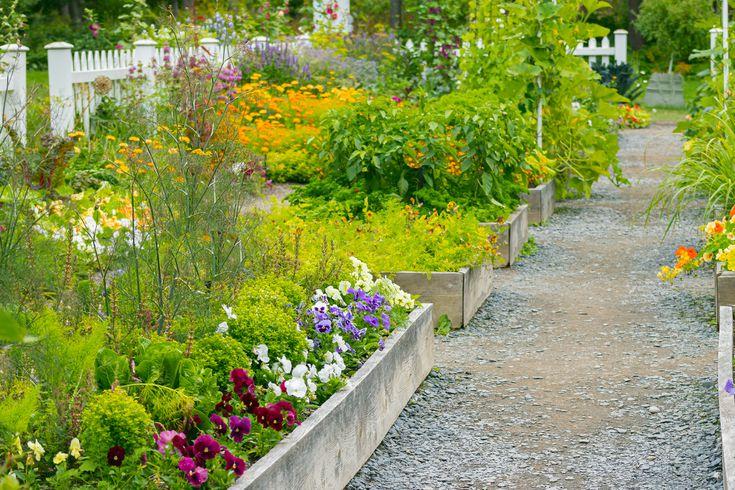 Starting A Garden From Scratch, How To Start A Garden In Small Backyard