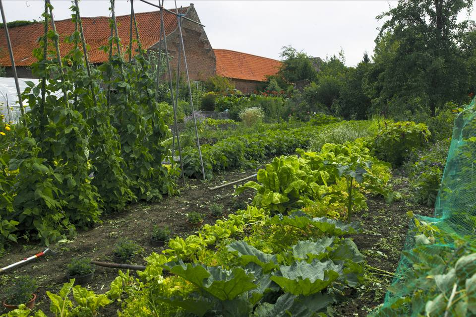 Different Vegetables Growing in Vegetable Patch, Belgium