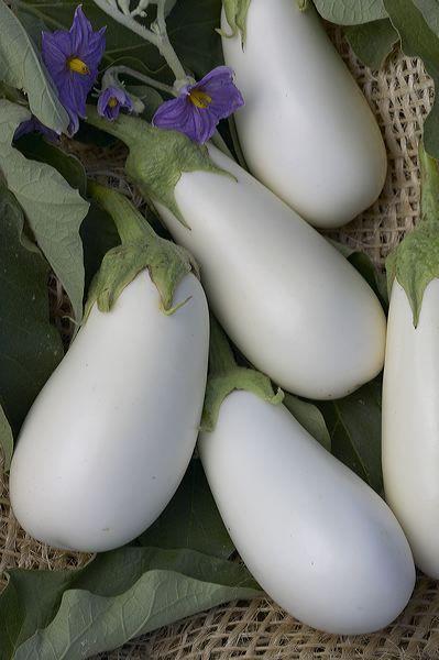 Choosing And Growing Eggplant
