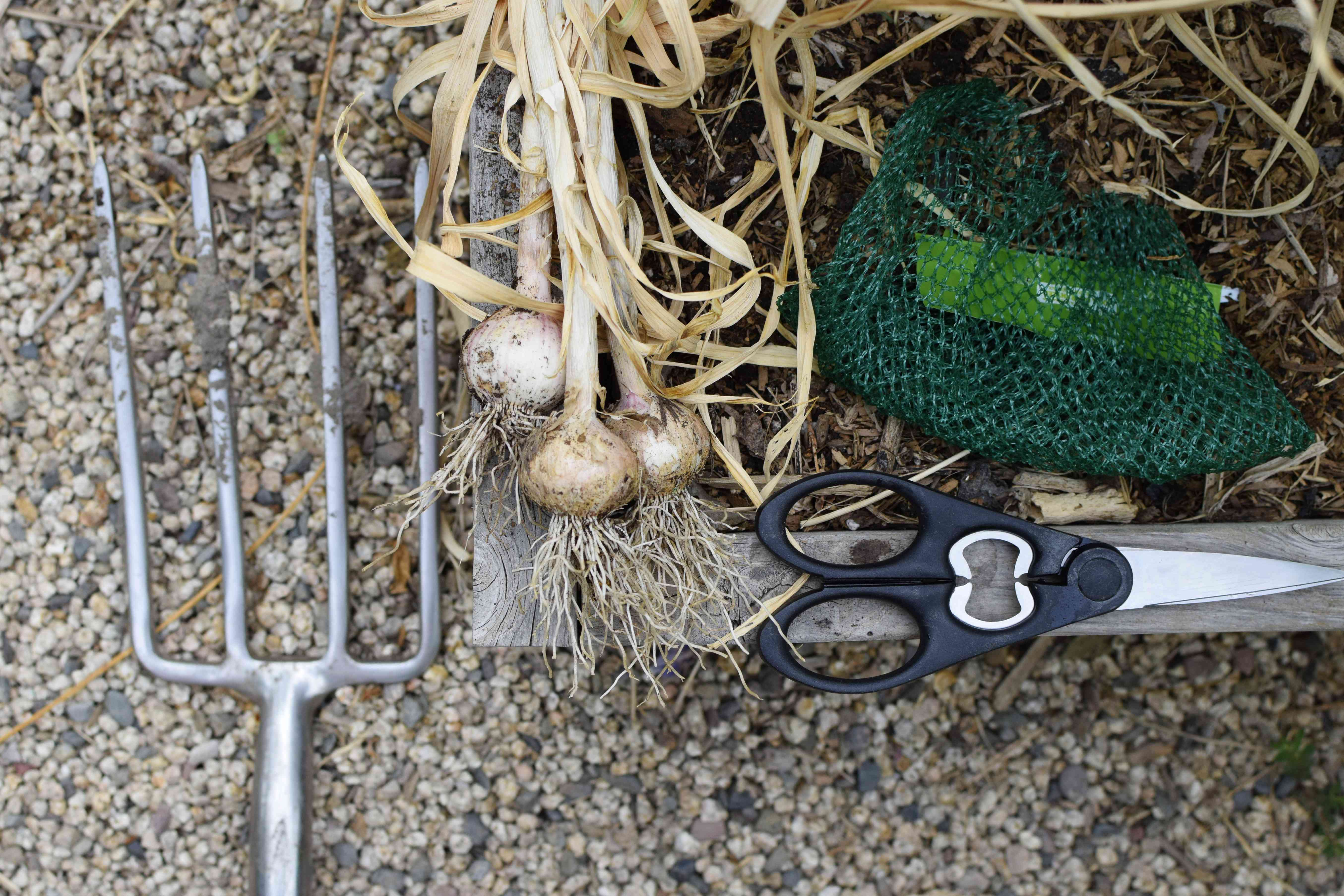 Materials and tools to harvest garlic