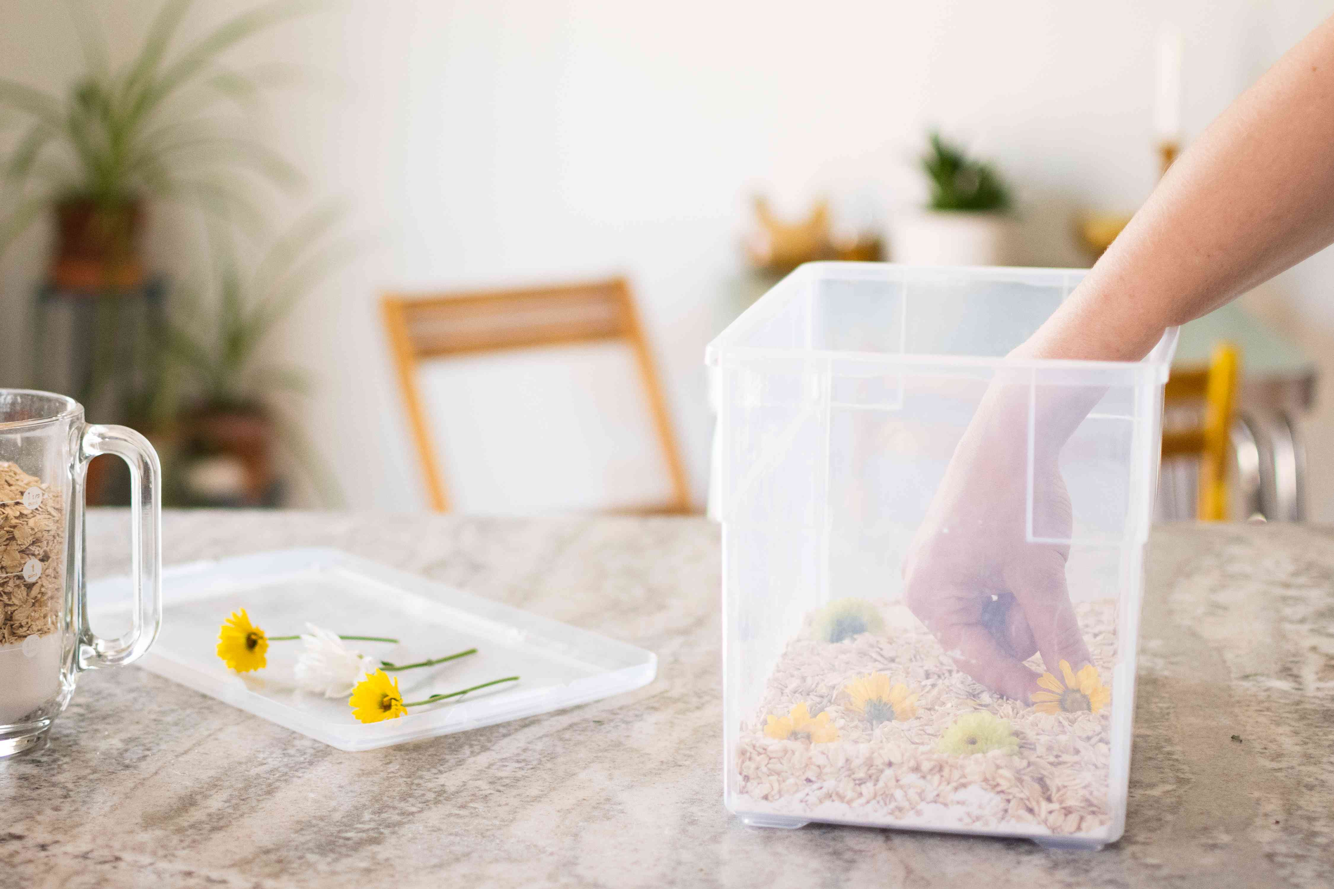 Yellow and white flowers placed in plastic bin with oats and borax