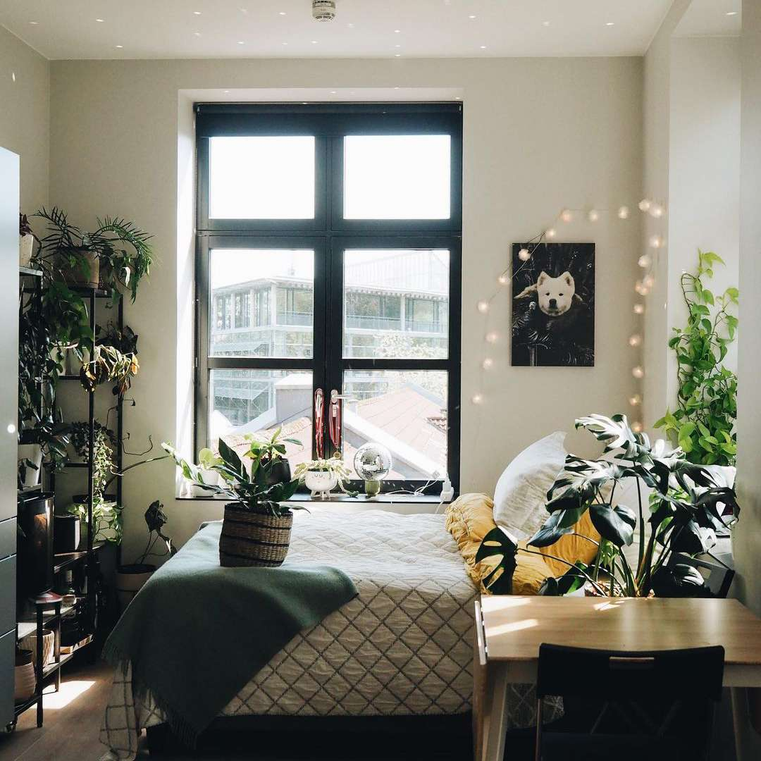 disco ball in plant bedroom