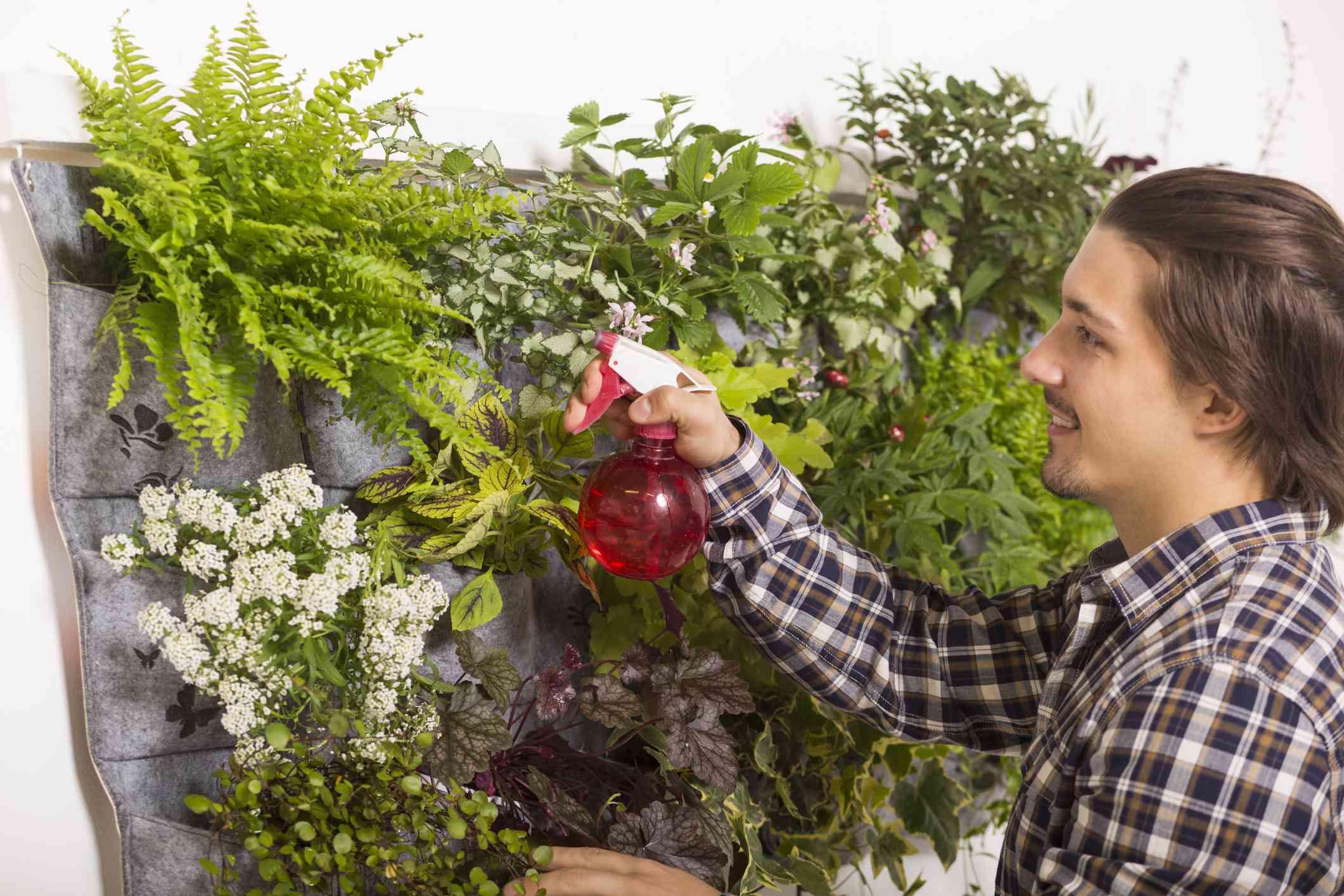 Man spraying his vertical garden.