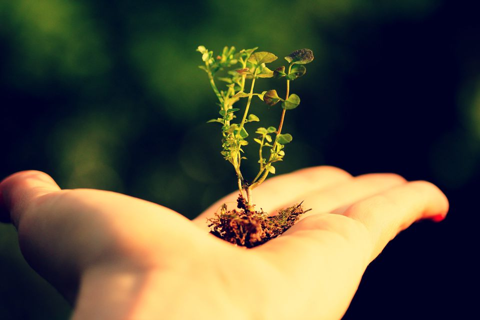 Hand holding a tiny green plant with roots