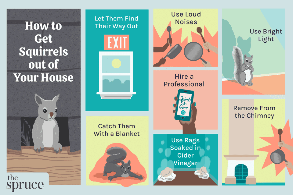 How to Get Squirrels out of Your House