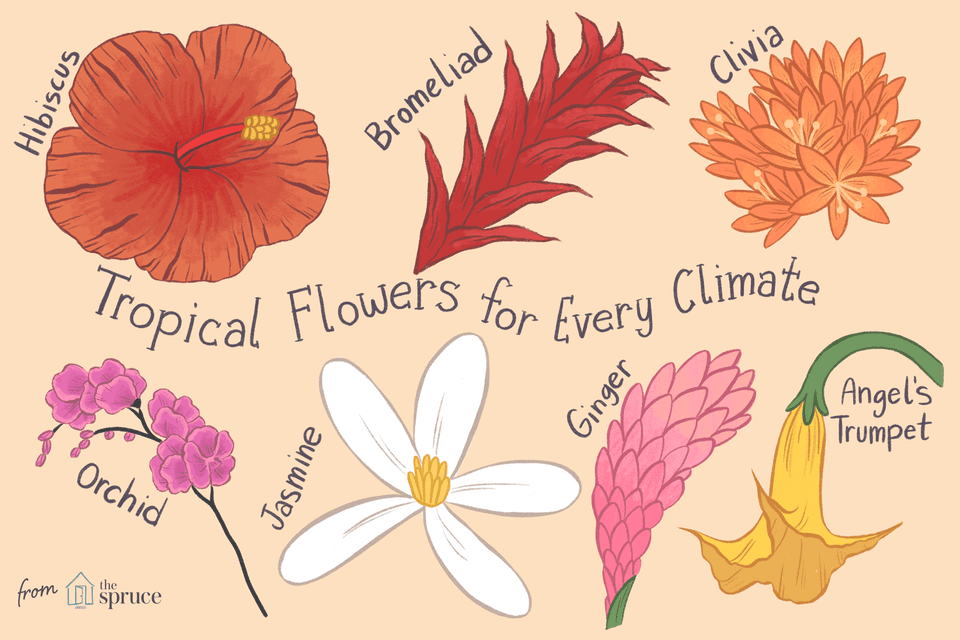 illustration of tropical flowers to grow in every climate