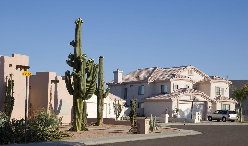 Cactus Saguaro en el patio delantero