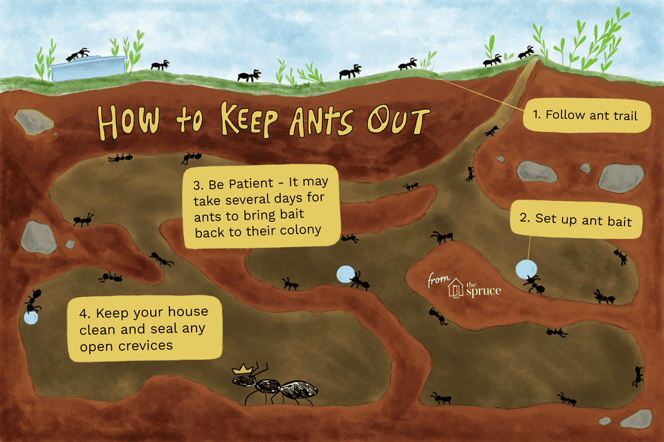 Illustration of how to keep ants out