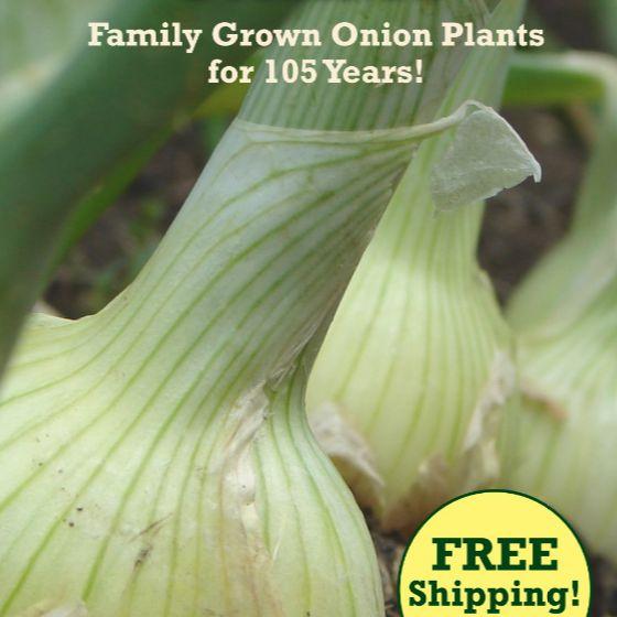 El Catálogo de semillas de Dixondale Farms 2018