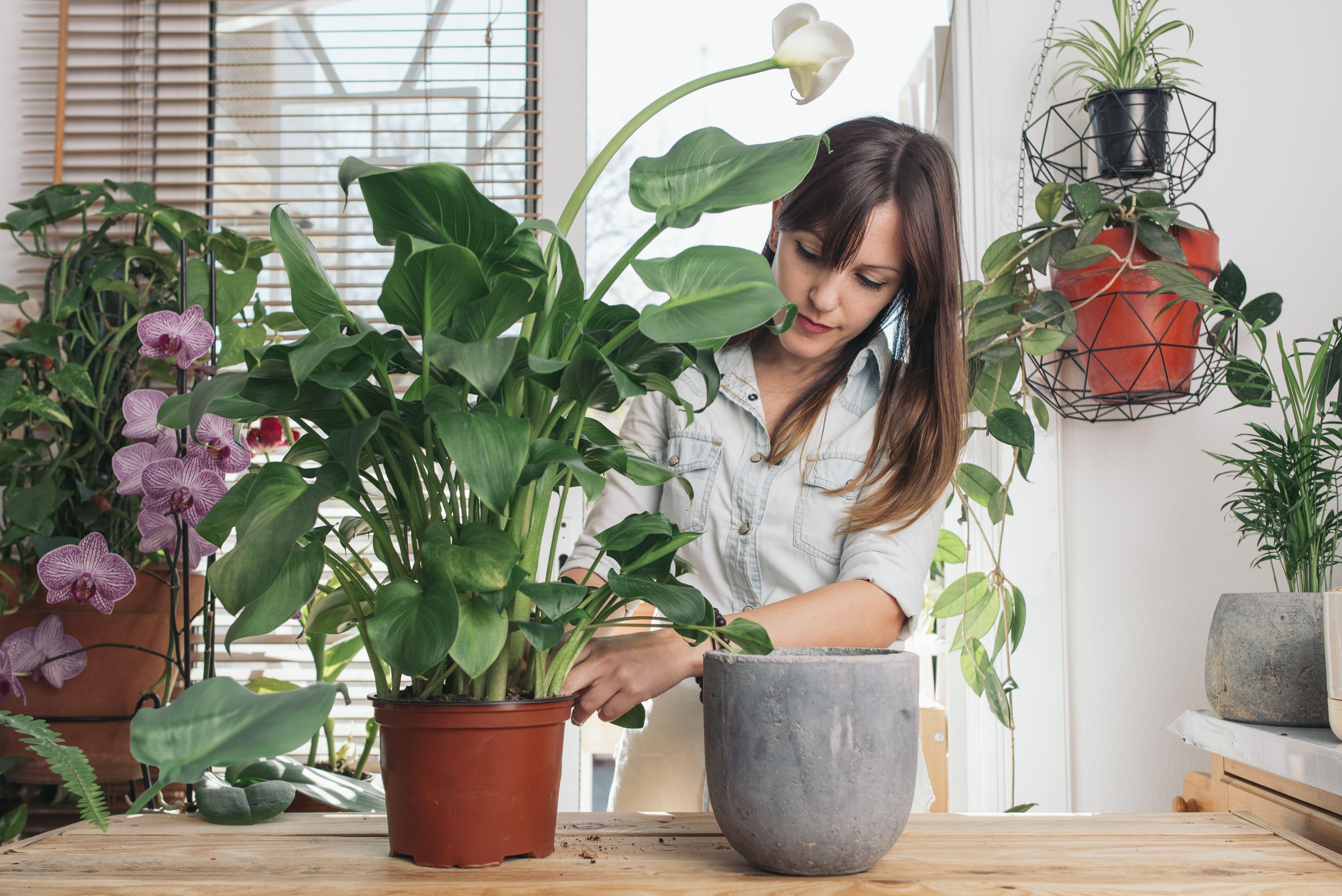 The 6 Best Indoor Planters
