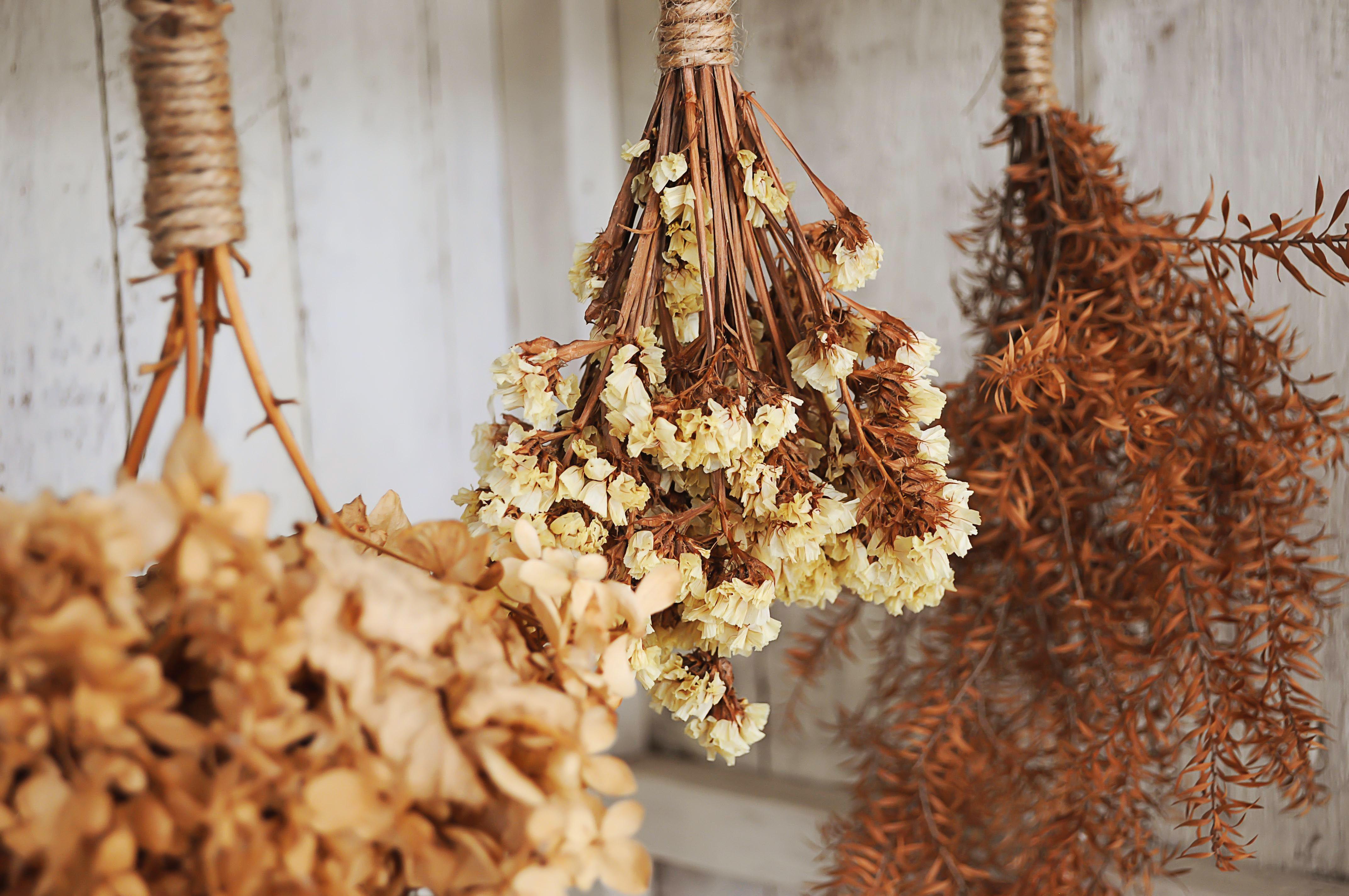 How to dry flowers with laundry borax izmirmasajfo
