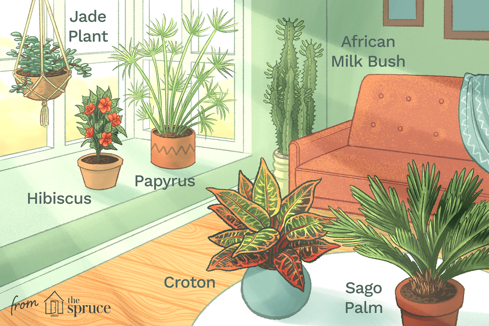 Illustration of house plants in a room