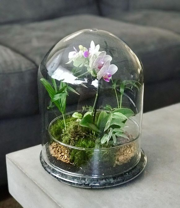 Terrario con orquídea