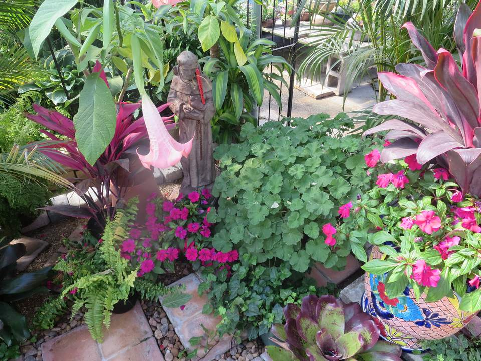 Datura, bromeliad, and impatiens flowers