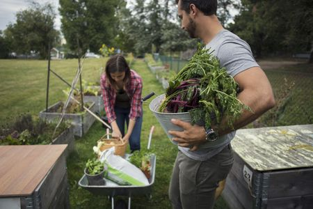 Starting Your Own Permaculture Garden