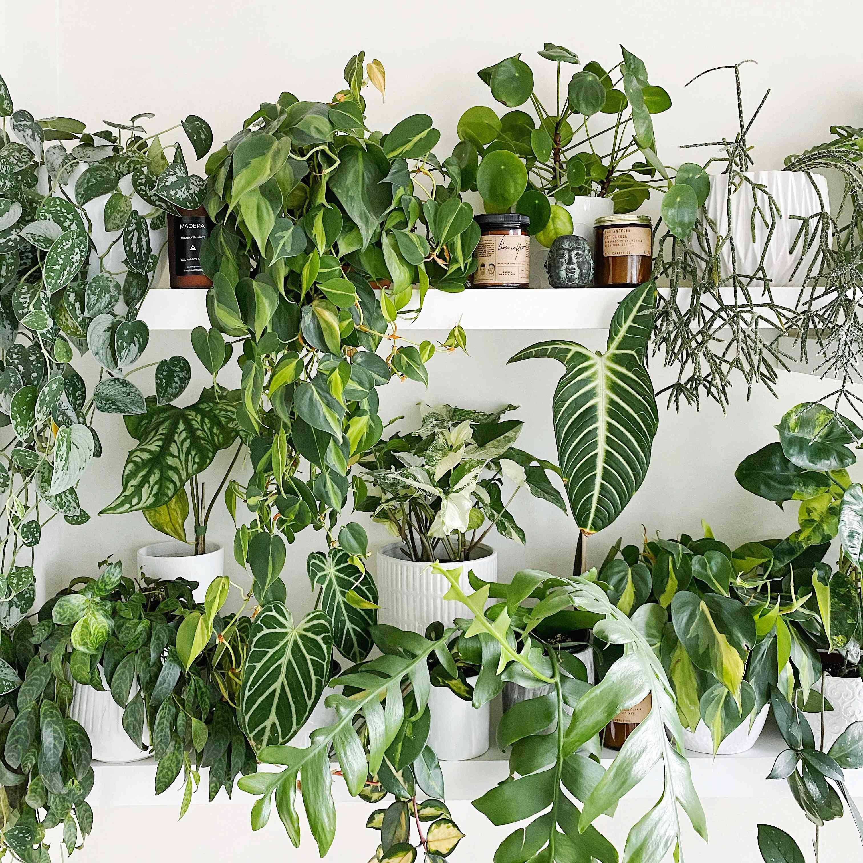 Gorgeous plant arrangement on a plant shelfie by Dorrington Reid, @dorringtonr #PlantShelfie