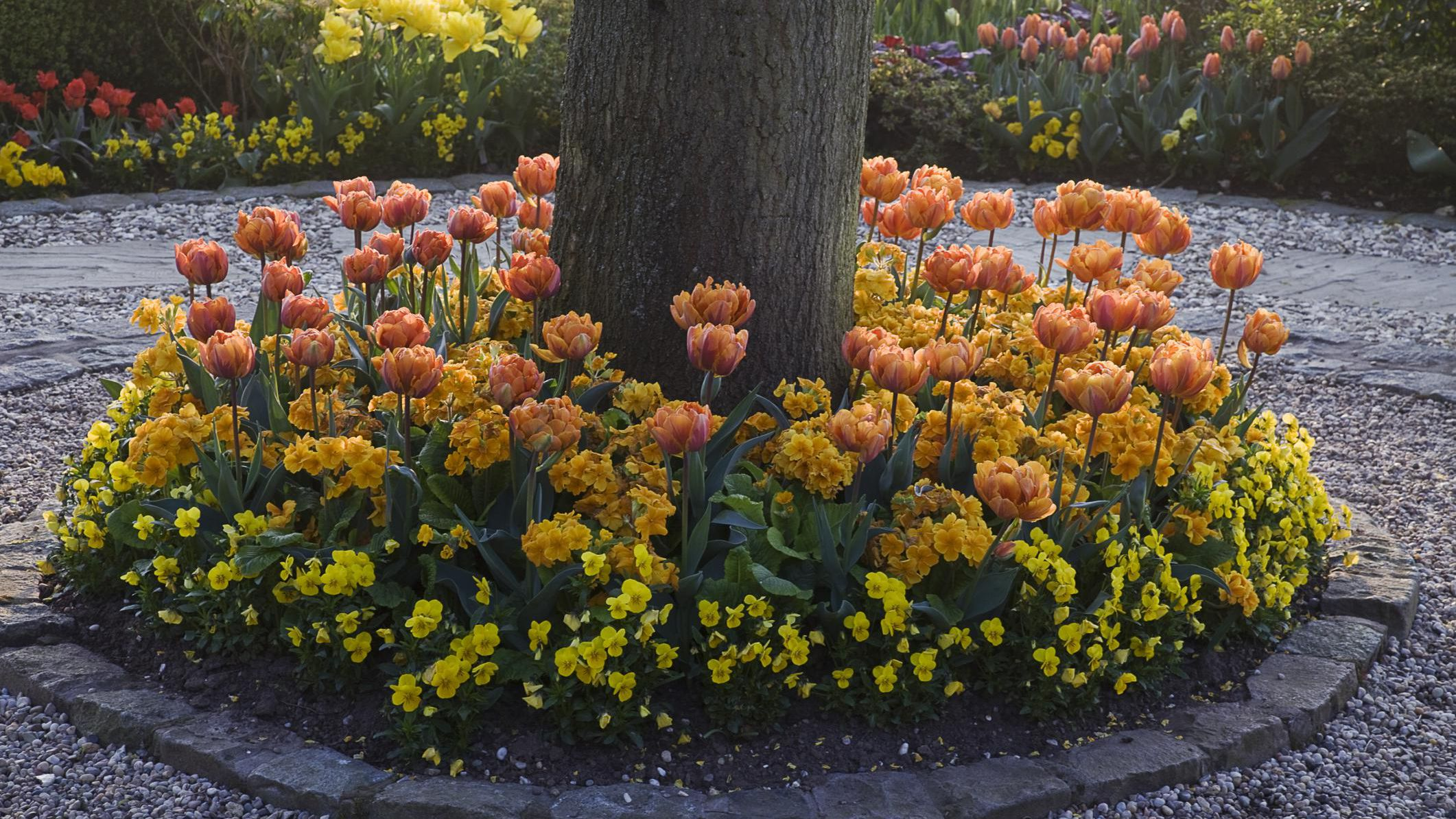 How Do You Plant Ground Cover Or Flowers Under Trees