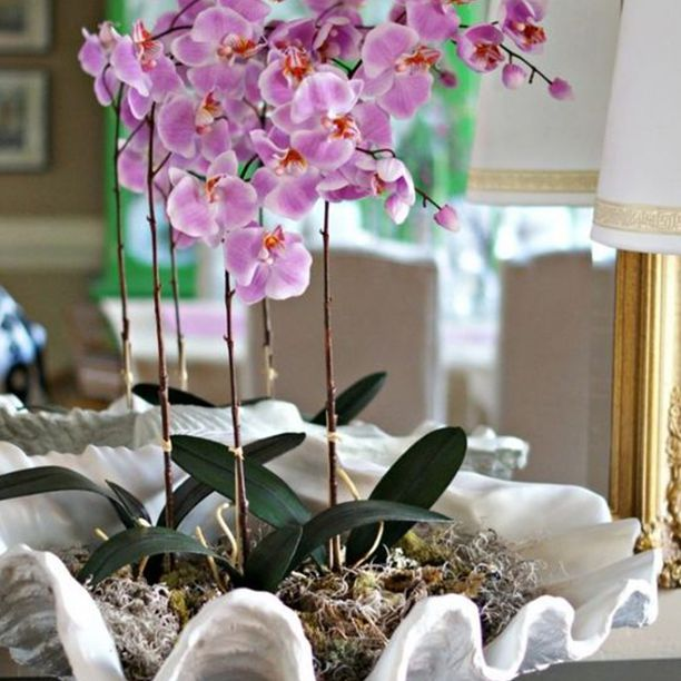 orquídea en maceta en concha