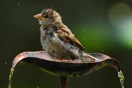 Will Copper Keep a Bird Bath Clean?