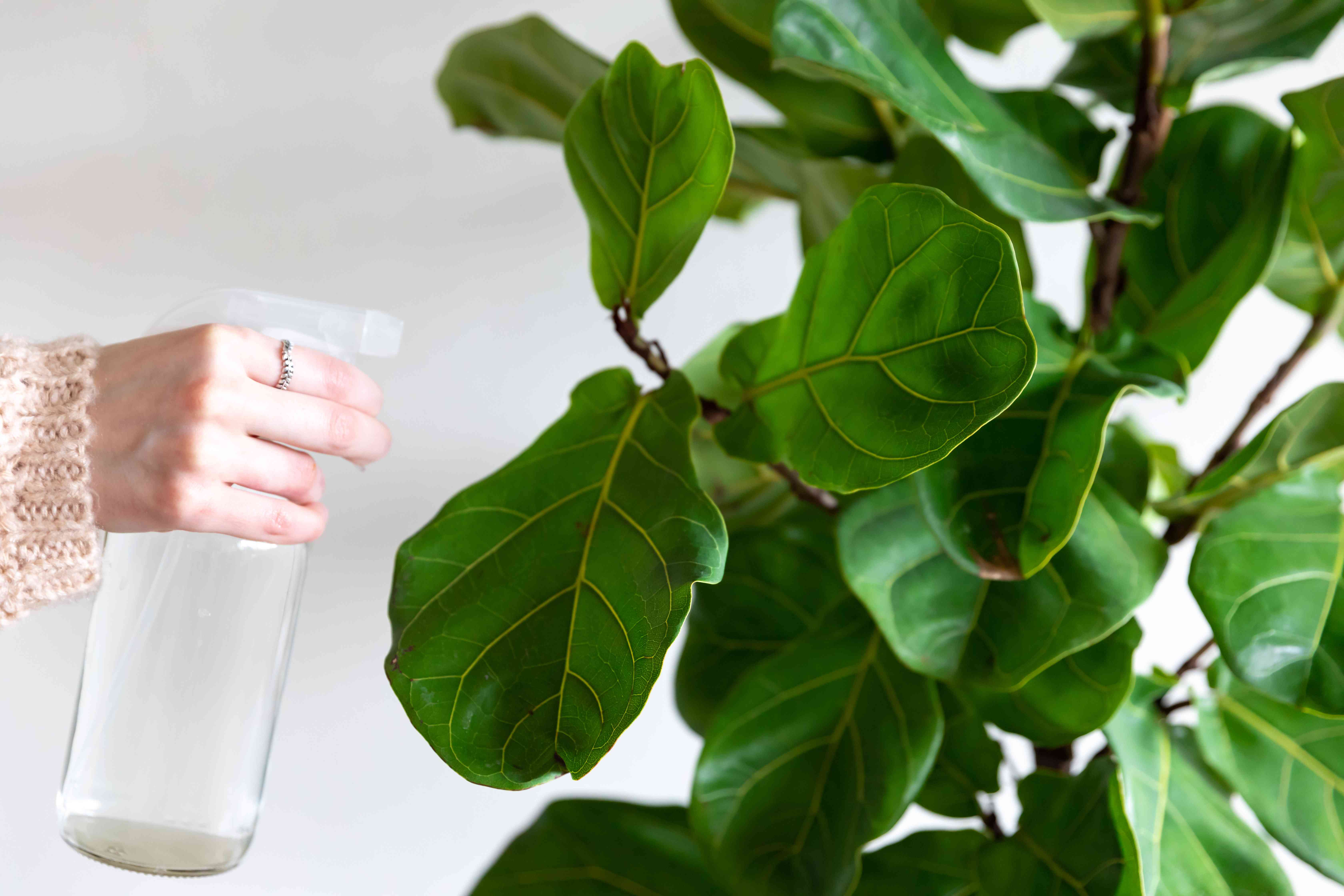 person spraying a plant