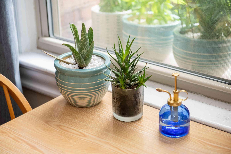 plantas cerca de un ventana con corrientes de aire
