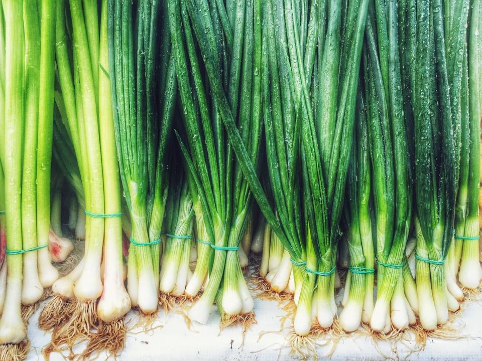 Close up of scallions