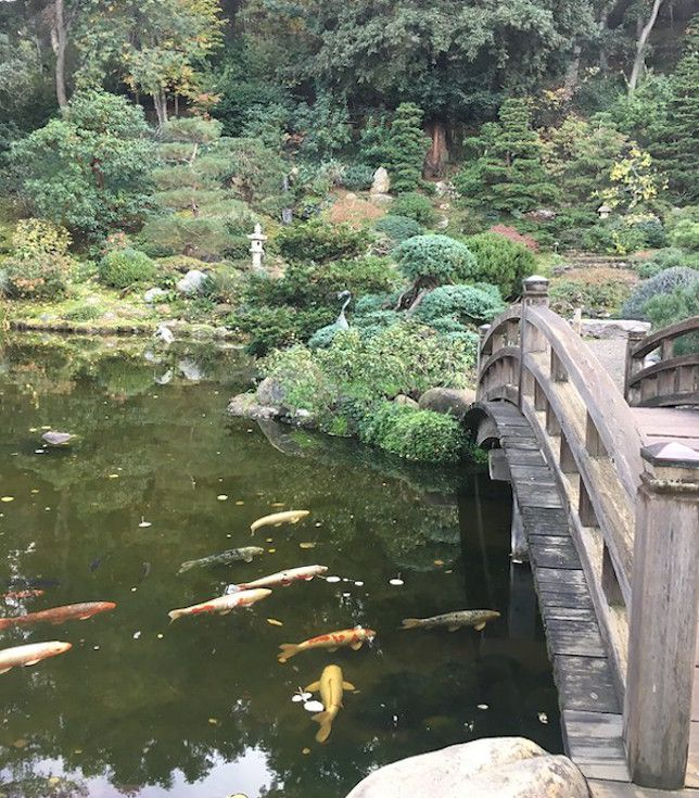 Weathered wood bridge over koi pond with variety of green shrubs and trees in background.
