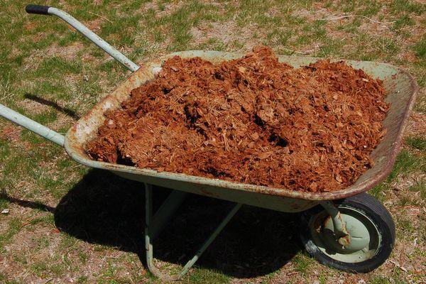 coir mulch in wheelbarrow.