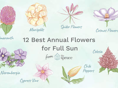 12 Best Annual Flowers For A Sunny Site Plants