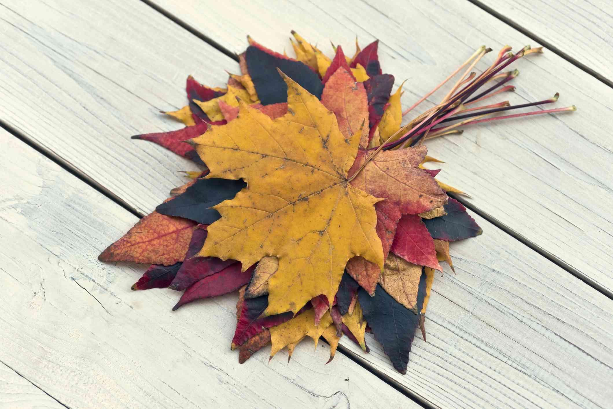 Coloridas hojas de otoño apiladas sobre una mesa