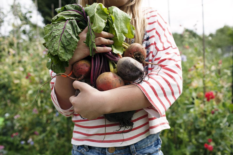 Girl holding some beets in a garden