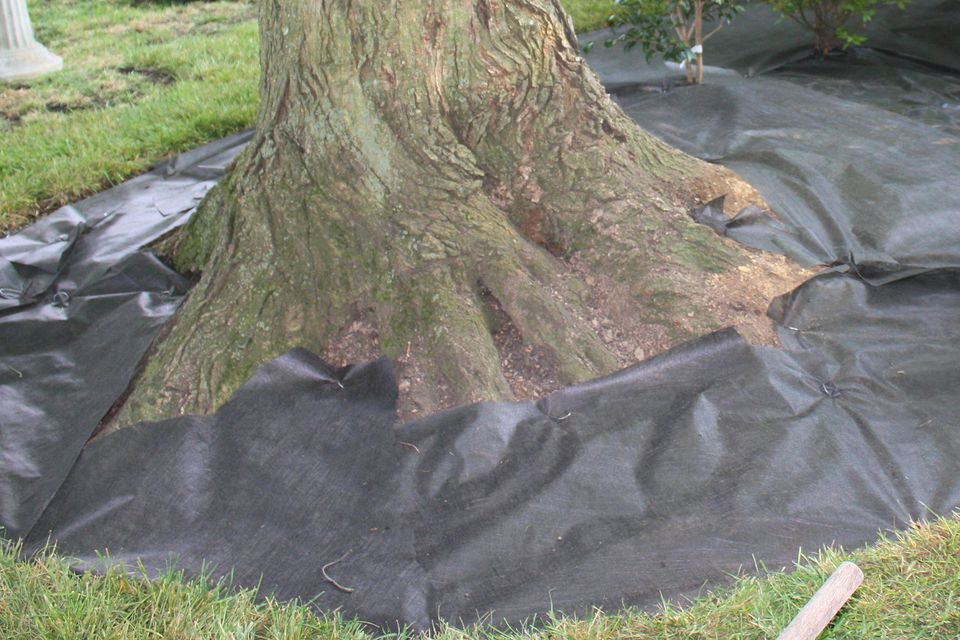 Landscape Weed Barrier Fabric Around a Tree