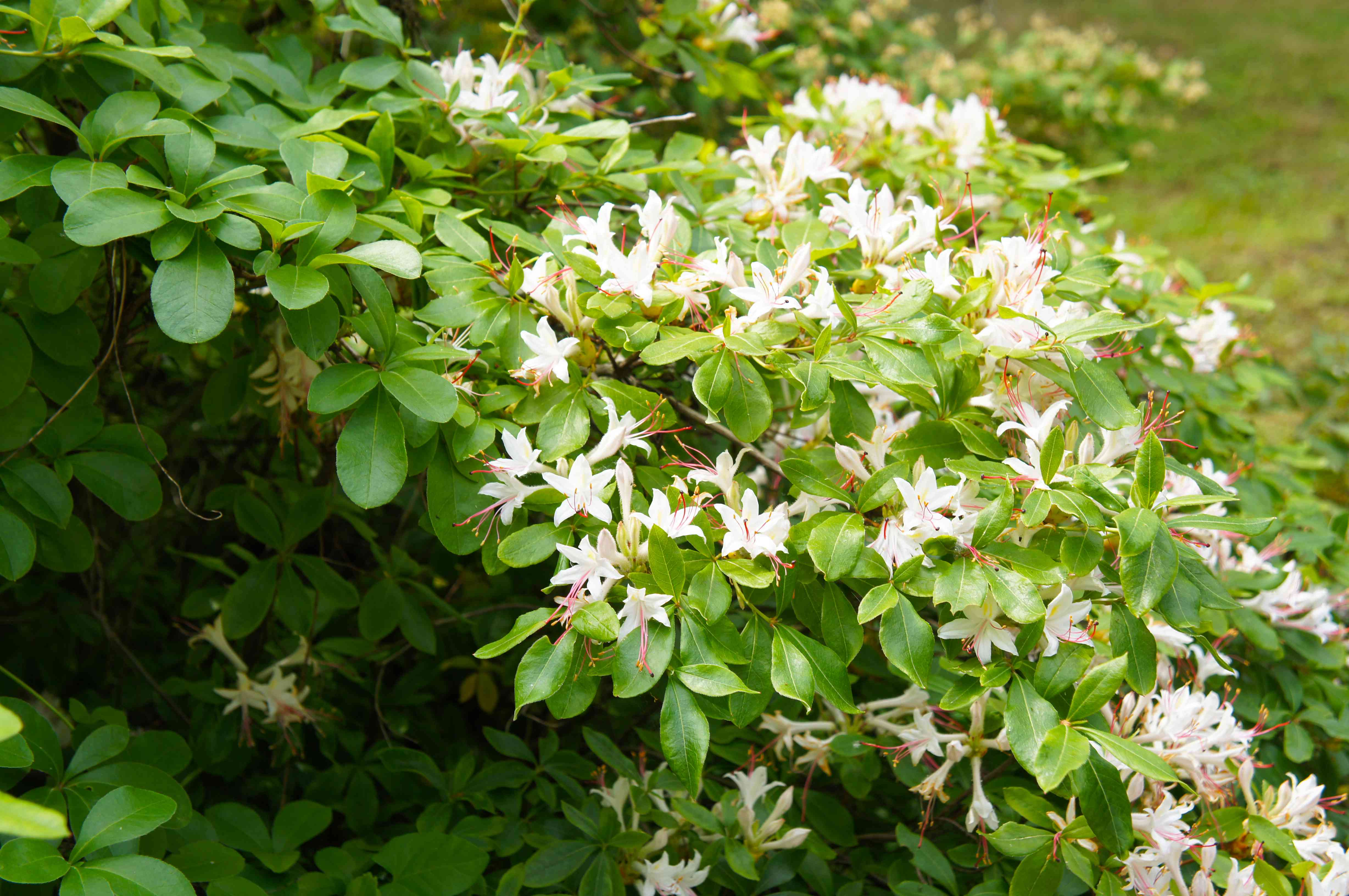 10 Best Native Plants for Southern Gardens