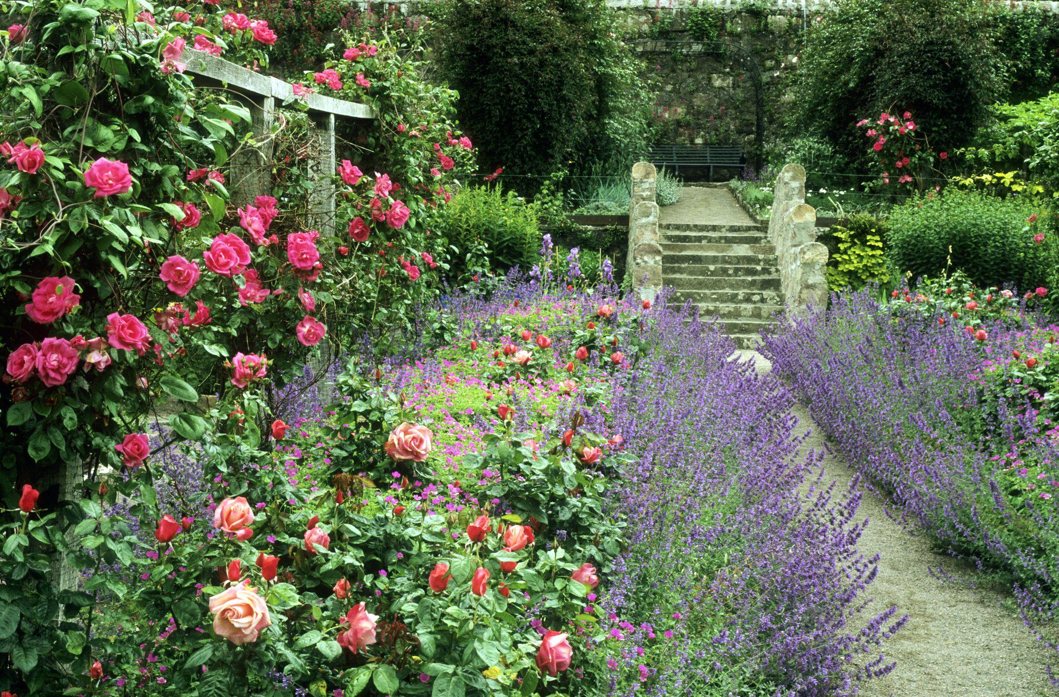 Inverewe Garden, Poolewe, climbing roses, Scotland