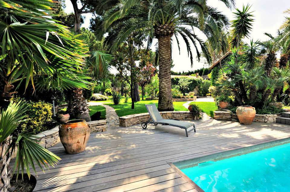 palm trees by pool in yard
