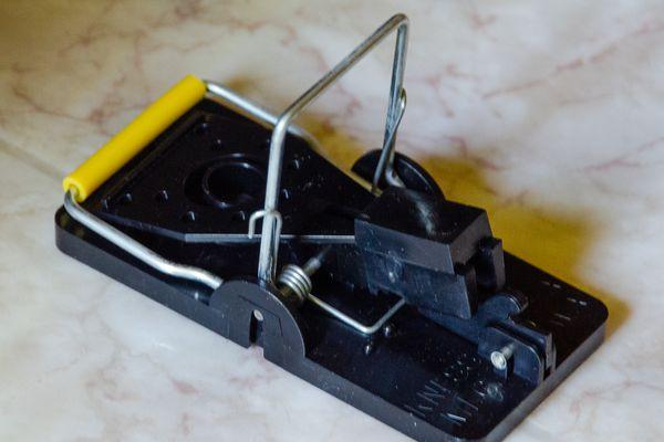 Snap-E Mousetrap