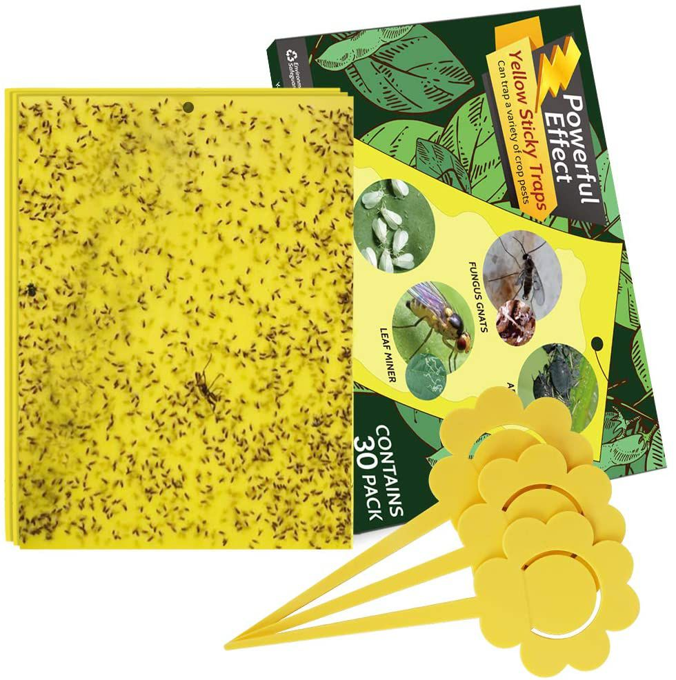 Kensizer 30-Pack Dual-Sided Yellow Gnat Traps