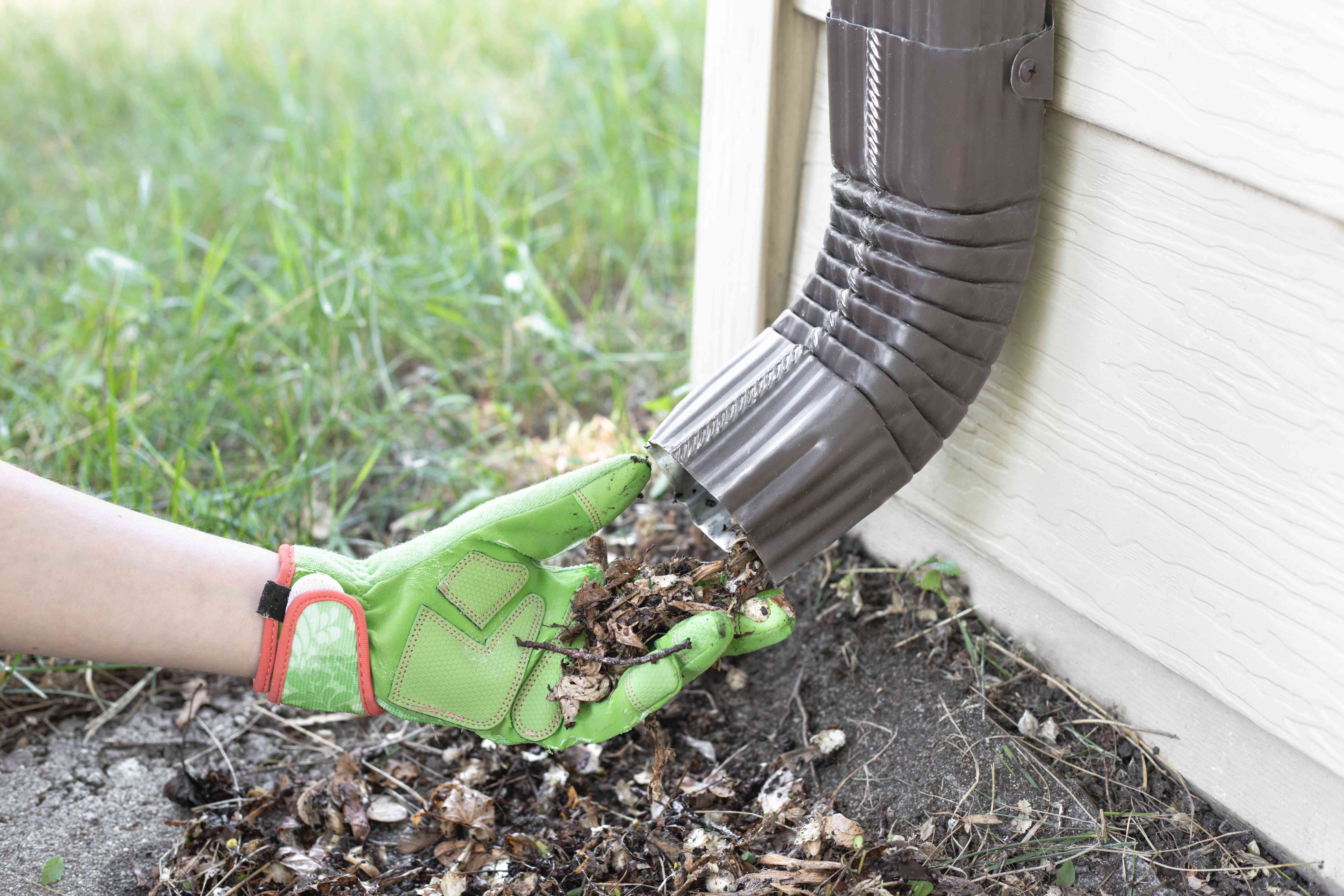 Gutter being cleaned out to prevent ants