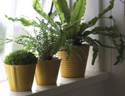 How to Clean the Leaves of Houseplants Natural Leaf Shine For Houseplants on natural boxes, natural fire ant killer, natural rock shine, natural sun shine, natural spider killer,