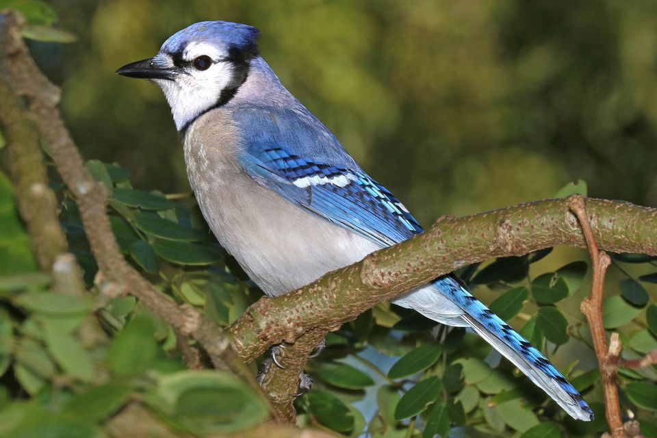 15 Most Popular North American Bird Species