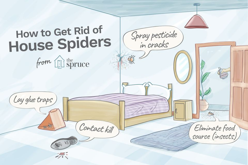 Illustration depicting how to get rid of house spiders