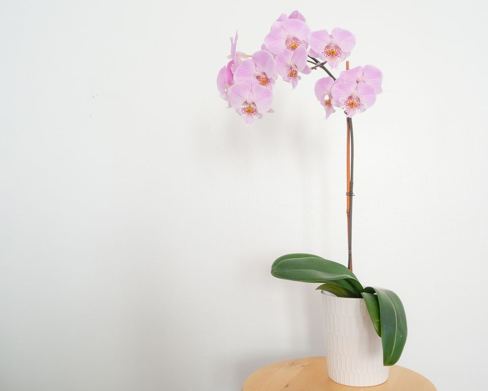 an orchid plant on a side table