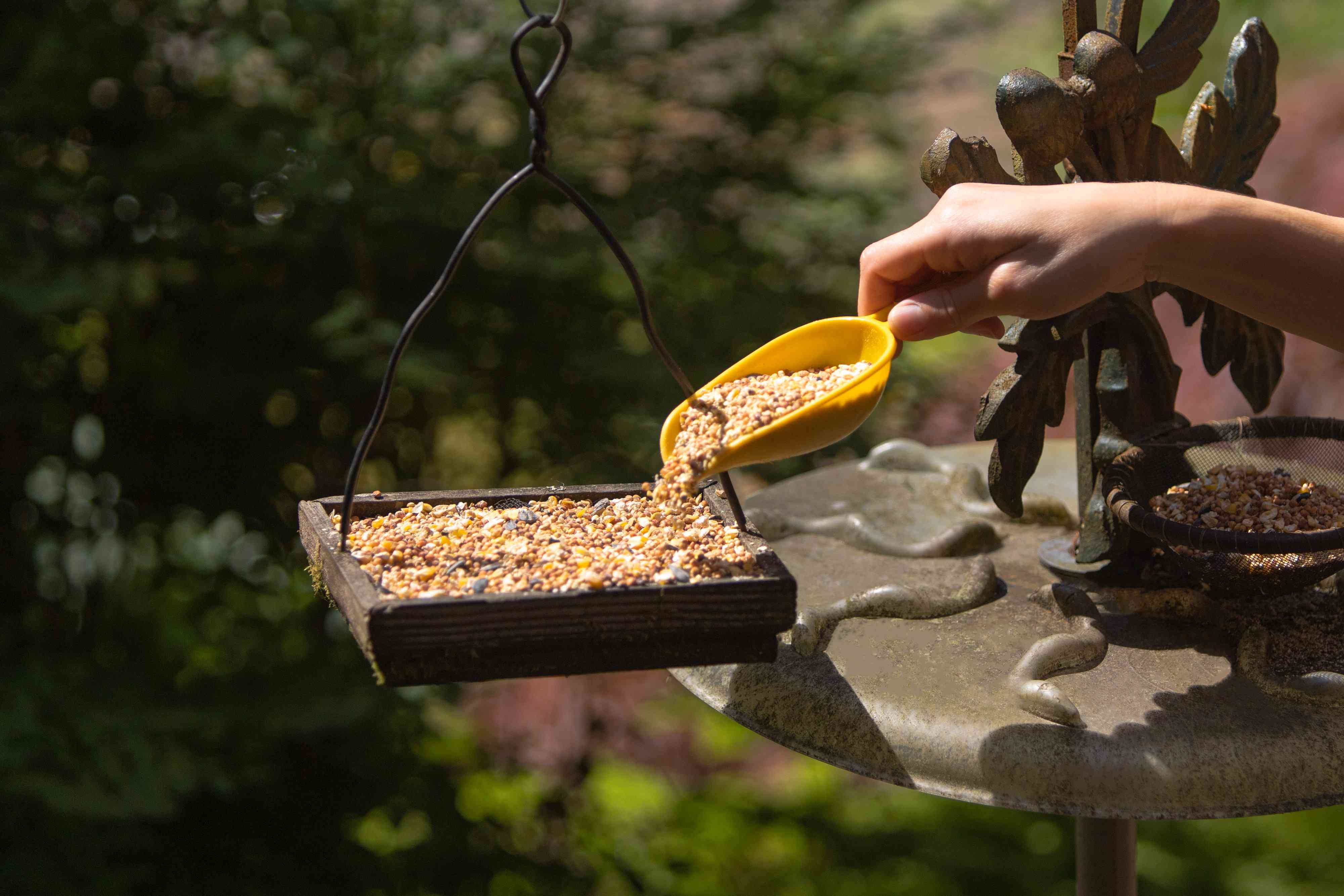 person placing seed in a bird feeder